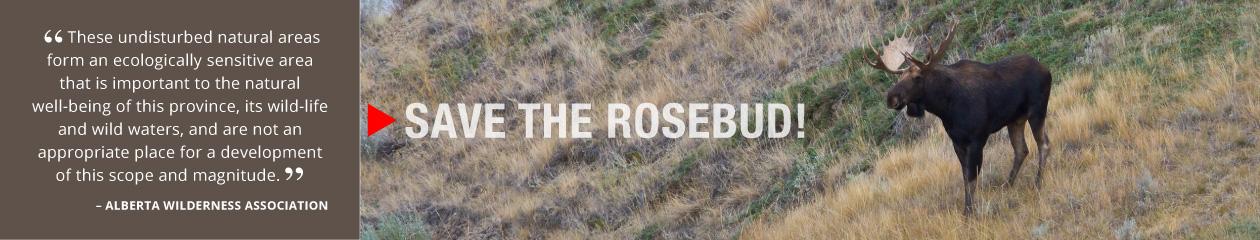 Save the Rosebud